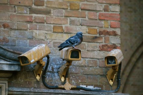 Pigeons: City folk or government spies?